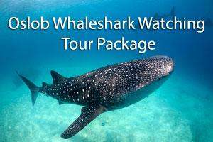 cebu oslob whaleshark